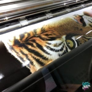 Zoo Miami Vehicle Wrap by Fantasea Media